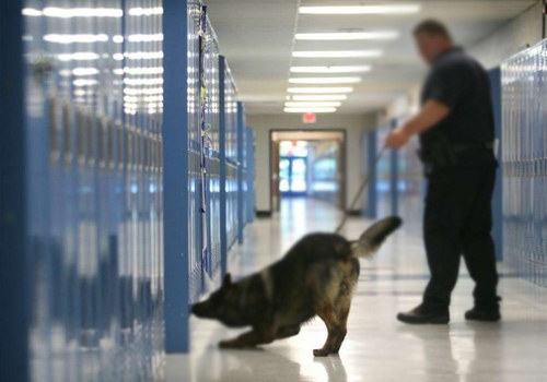 Drug Sniffing Dogs on School Campus
